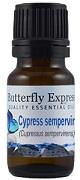 cypresssempervirens